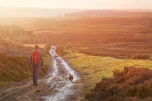 A hiker and their dog walking along a wet dirt track at sunset in the English Countryside. Edmondbyres Common.